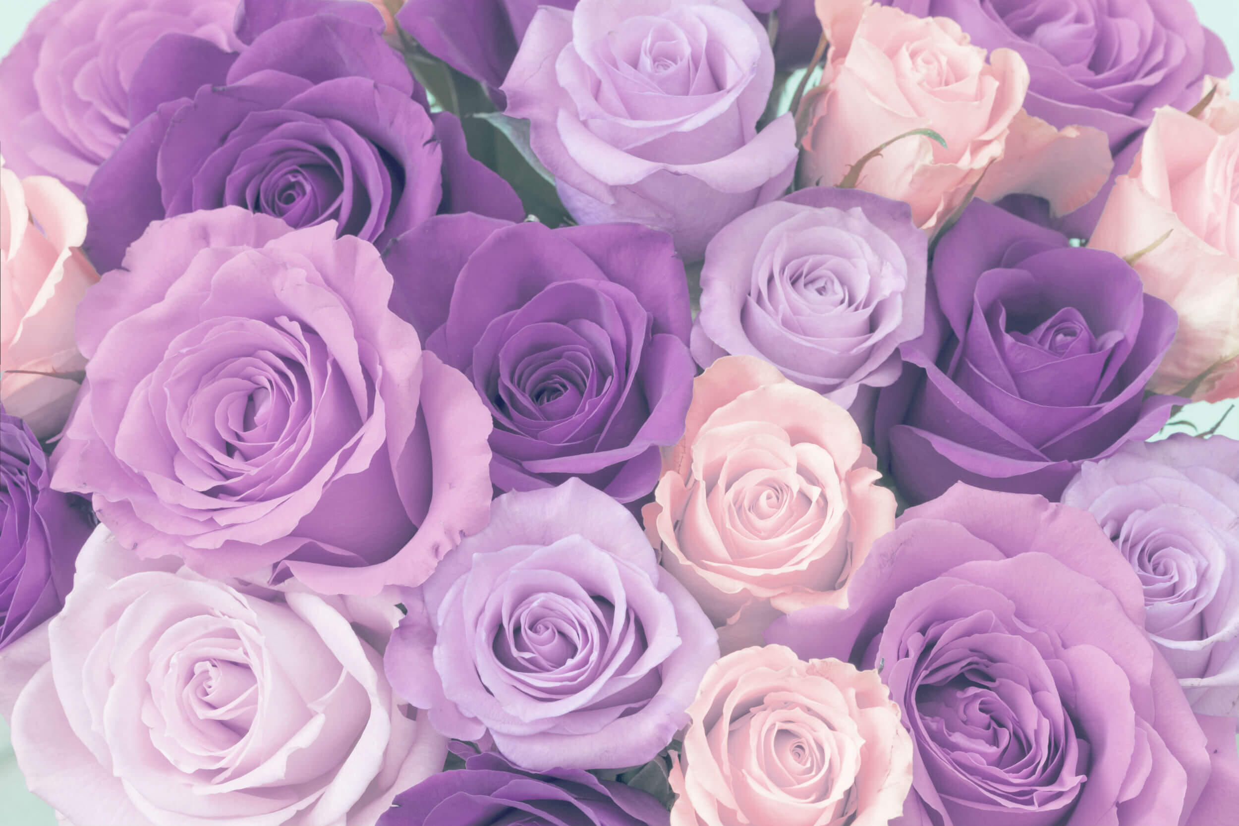 ultimate purple rose meaning