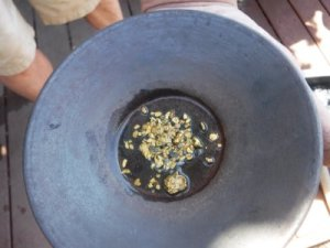 gold nuggets in metal pan
