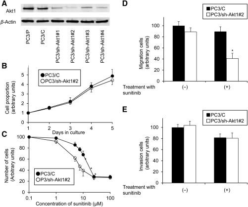 Enhanced Sensitivity to Sunitinib by Inhibition of Akt1