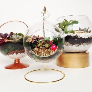 DIY Terrariums 3 Ways - Gold Standard Workshop