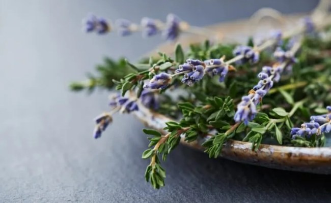 Herbs like lavender and thyme are natural air fresheners for your home (istockphoto)