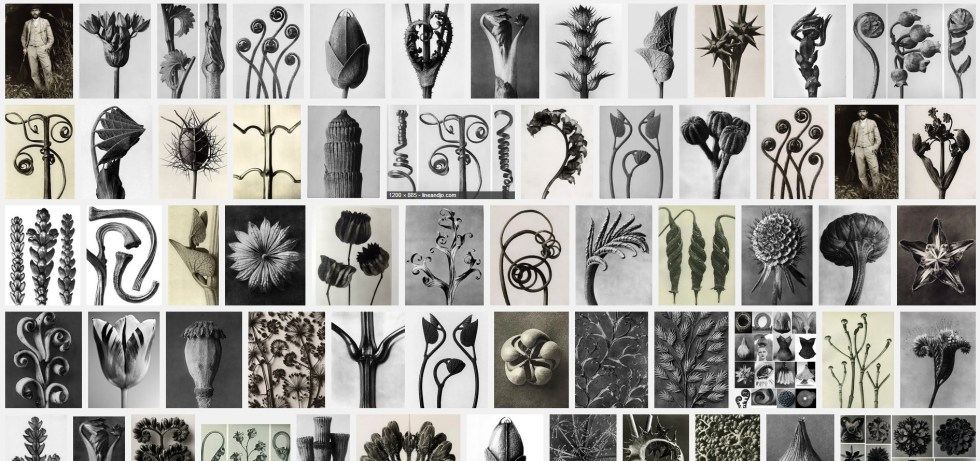 Image search for Karl Blossfeldt