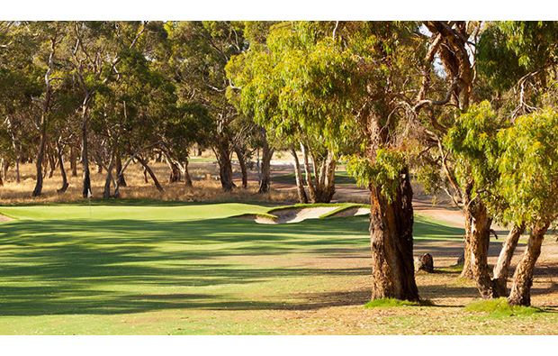 Tanunda Pines Golf Club in Adelaide  Golf Course in