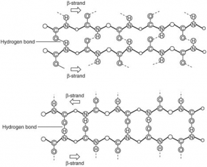 What are the Secondary Structure of Proteins?
