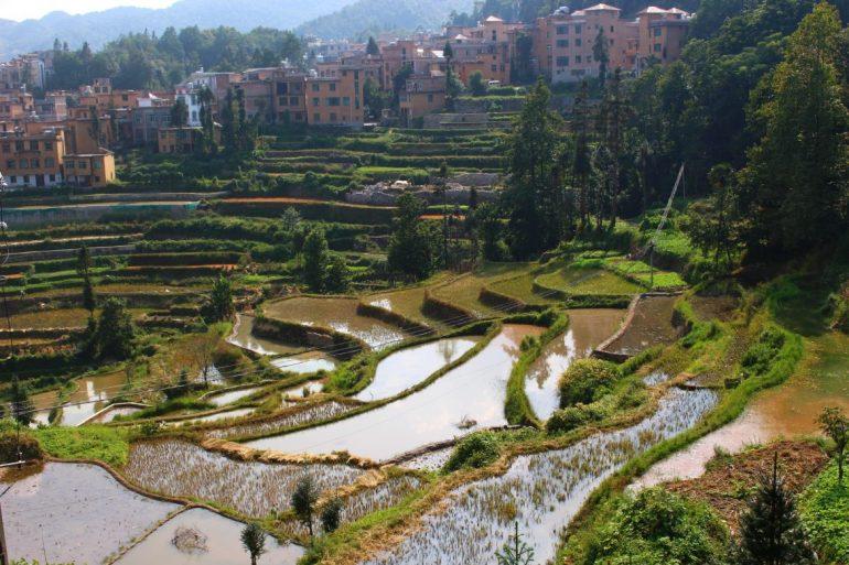 Yuangyang rice terraces China