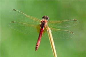 夢見昆蟲有哪些徵兆?_周公解夢_周公解夢大全