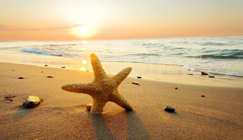 seastar_on_the_beach_hd