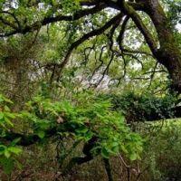Jornada sobre control de plantas exoticas invasoras en La Gomera
