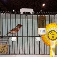 Paco Castilla consigue medalla de oro en el Campeonato Ornitológico de España