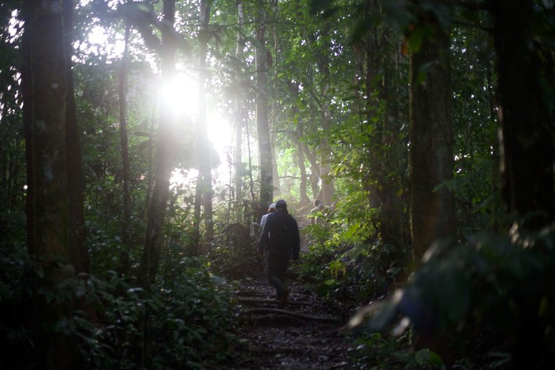 Travel in the Amazon
