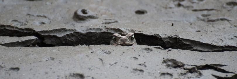 Ecuador Travel-Frogs