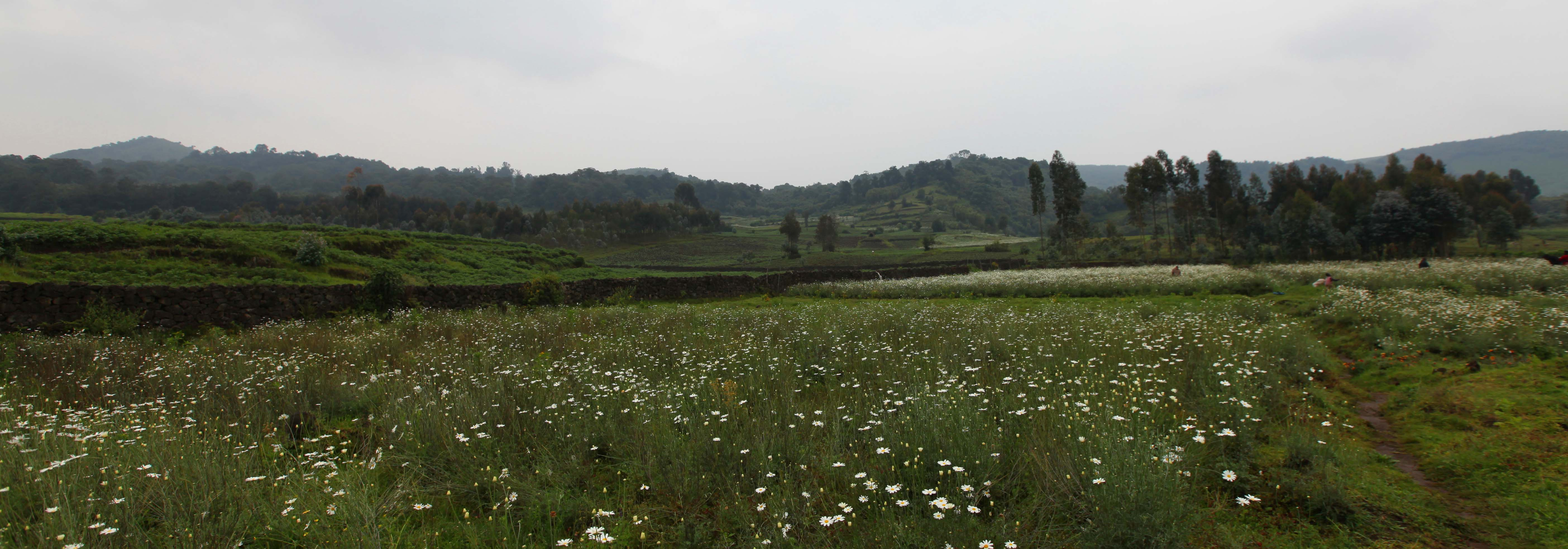 Farmland near Virunga