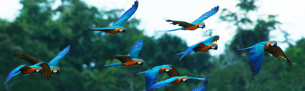 Birds of the Amazon Rainforest