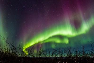 Northern Lights Ecotour