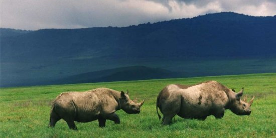 Ngorongoro Crater is One of the Last Places on Earth to See Black Rhinos