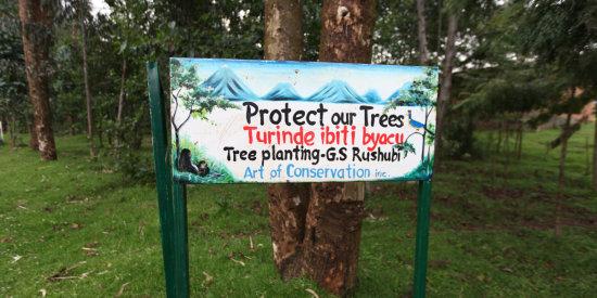 Protect the trees in Rwanda