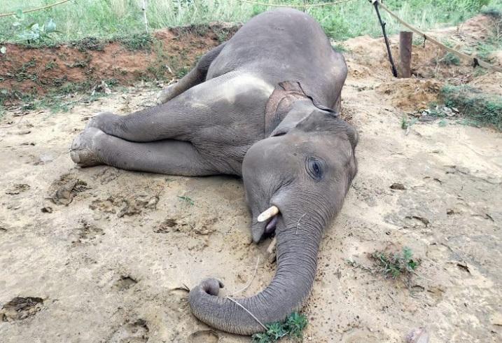 elephant-died-in-raigarh
