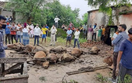 cow-died-in-bilaspur