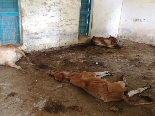 4-cows-killed-in-bilaspur