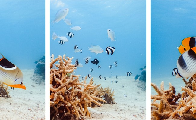 Blazing Hot Bora Bora Sailing French Polynesia