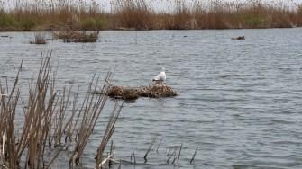 Păsări sălbatice în Delta Dunării. FOTO Adrian Boioglu