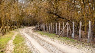 Pădurea Letea. FOTO Paul Alexe