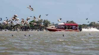 O șalupă intră într-un stol de pelicani. FOTO Facebook Marian Strinoiu