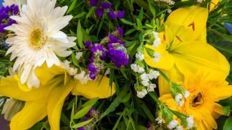 Flori în Marmaris. FOTO Paul Alexe