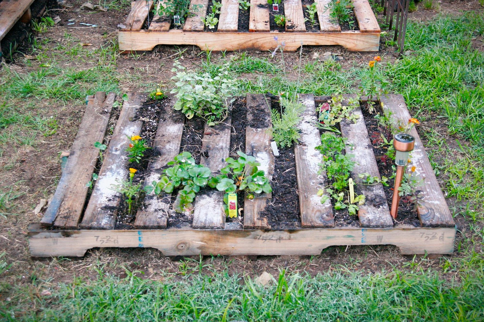 Easy Vegetable Gardening With Pallets 1