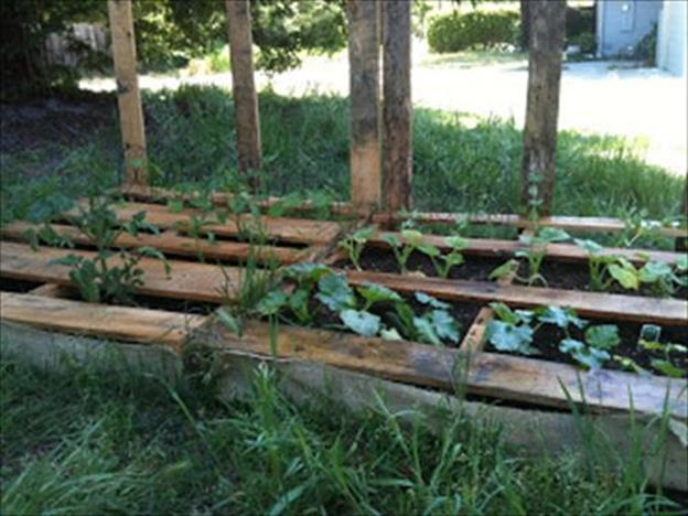 Easy Vegetable Gardening With Pallets 15