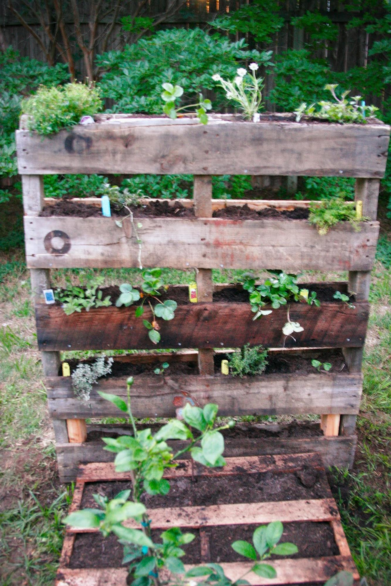 Easy Vegetable Gardening With Pallets 2