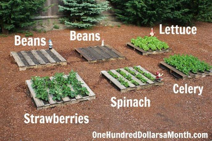 Easy Vegetable Gardening With Pallets 21