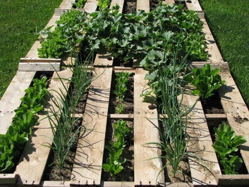 Easy Vegetable Gardening With Pallets 29