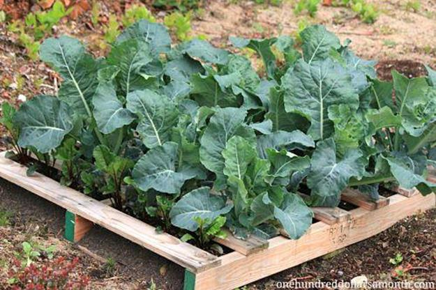 Easy Vegetable Gardening With Pallets 34