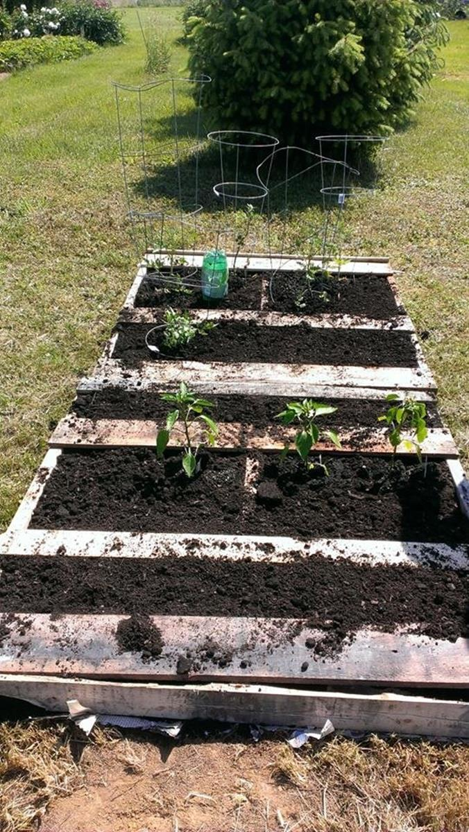 Easy Vegetable Gardening With Pallets 9