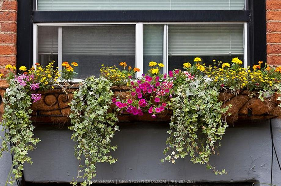 Best Beautiful Cascading Flowers For Window Boxes Ideas 11