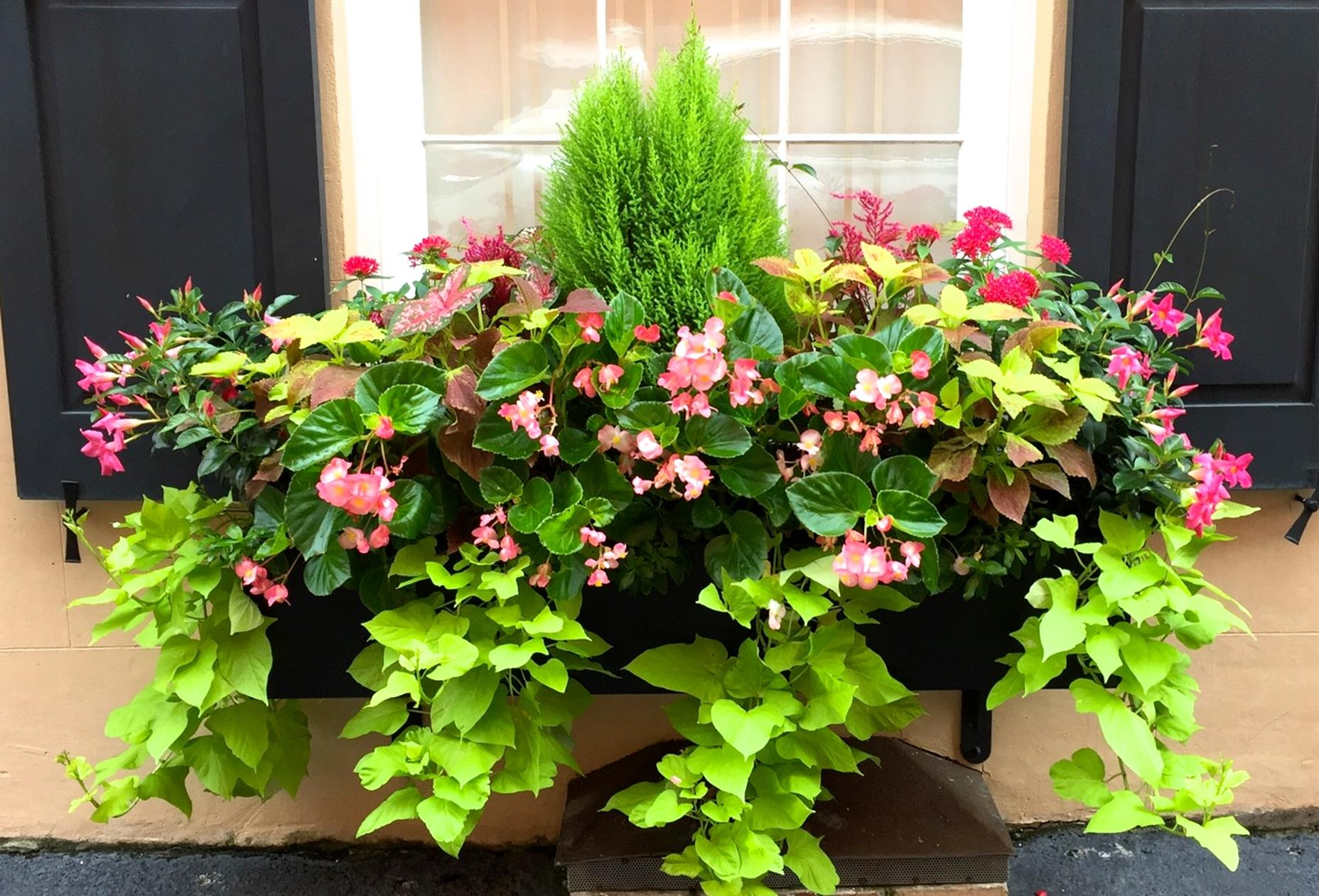 Best Beautiful Cascading Flowers For Window Boxes Ideas 14