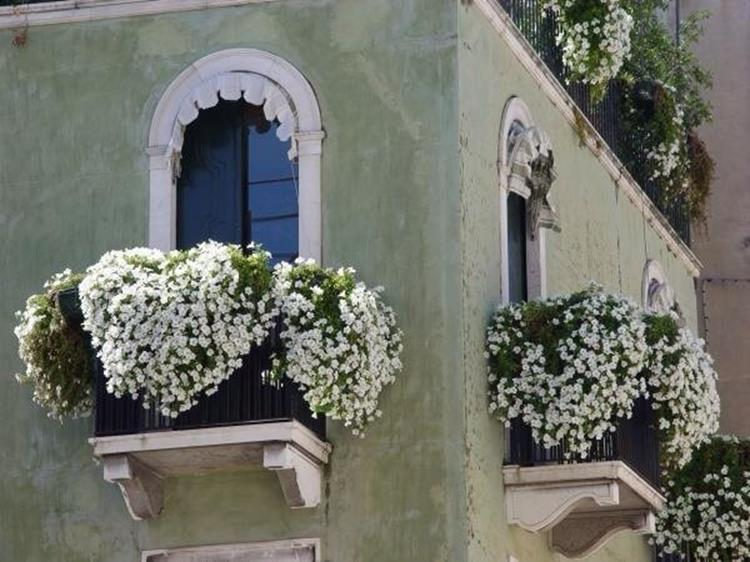 Best Beautiful Cascading Flowers For Window Boxes Ideas 2