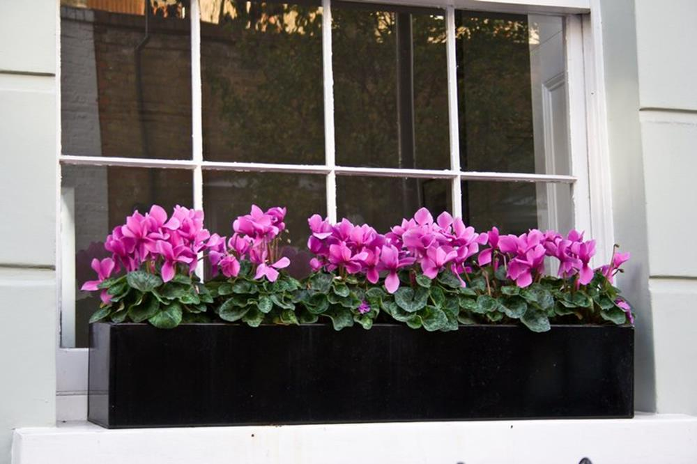 Best Beautiful Cascading Flowers For Window Boxes Ideas 20