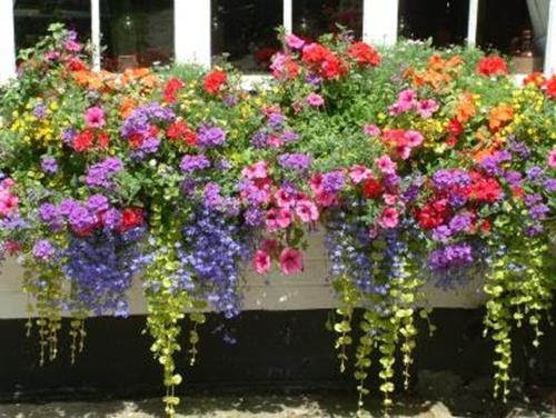 Best Beautiful Cascading Flowers For Window Boxes Ideas 22