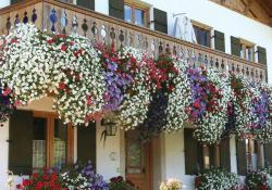 Best Beautiful Cascading Flowers For Window Boxes Ideas 26