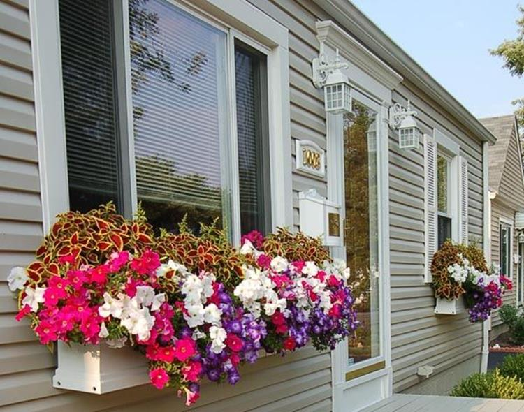 Best Beautiful Cascading Flowers For Window Boxes Ideas 29