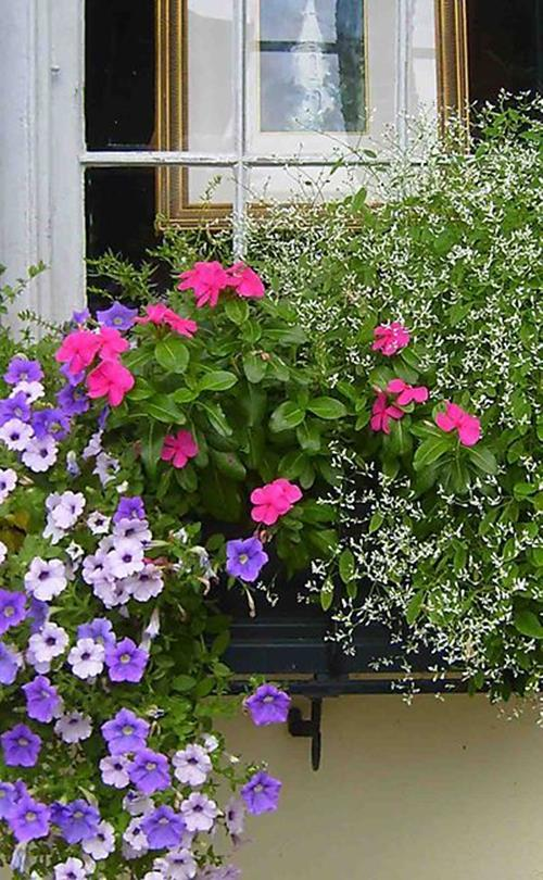 Best Beautiful Cascading Flowers For Window Boxes Ideas 37