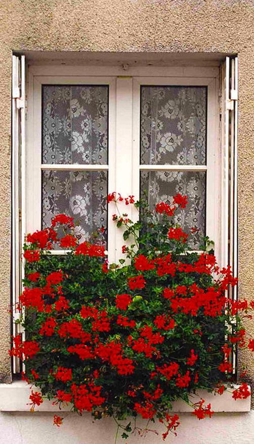 Best Beautiful Cascading Flowers For Window Boxes Ideas 38