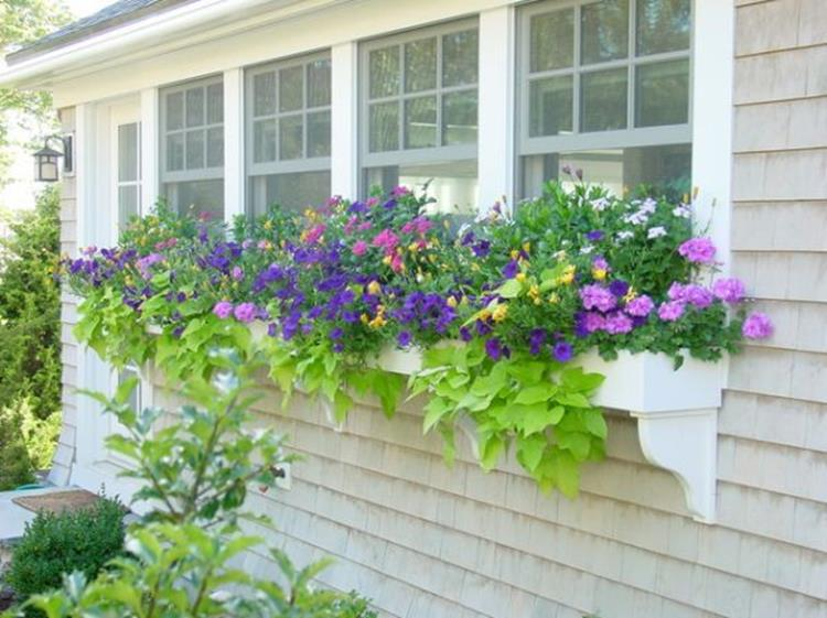 Best Beautiful Cascading Flowers For Window Boxes Ideas 39