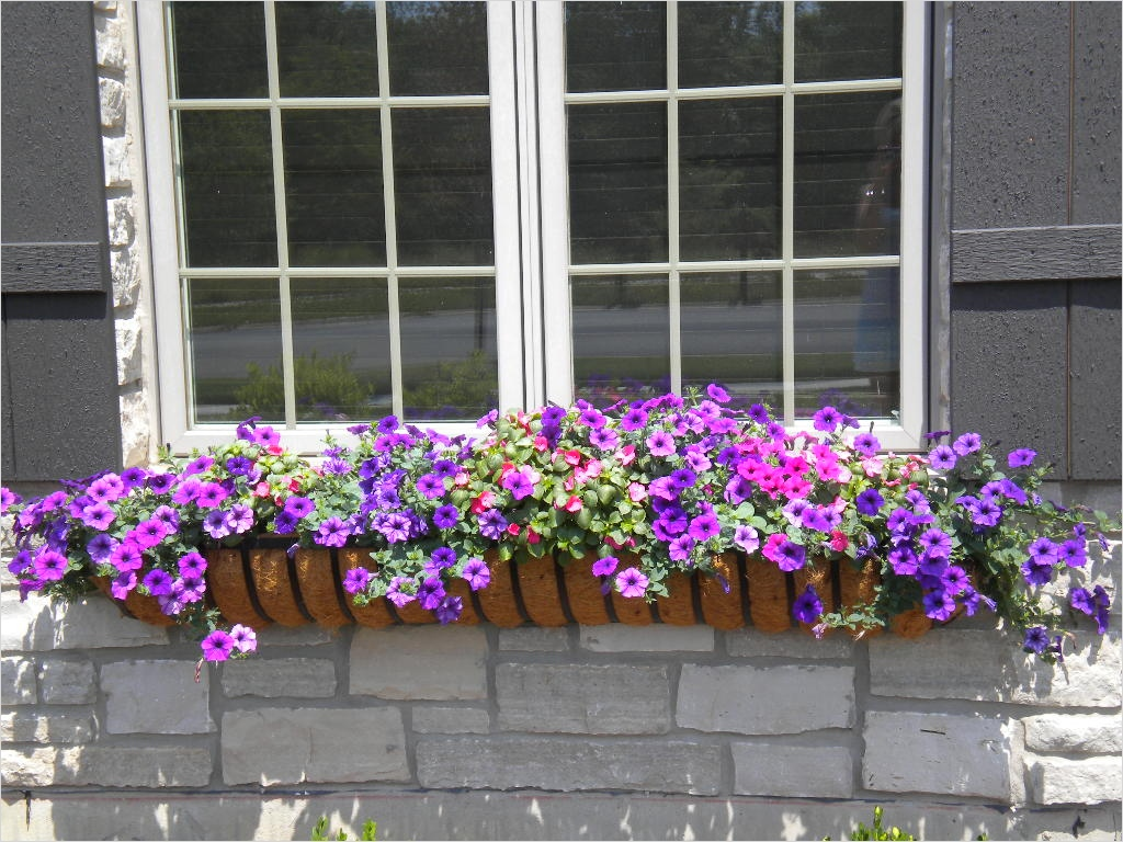 42 Best Flowers for Window Boxes 65 Our Flowers Window Box Contest 7