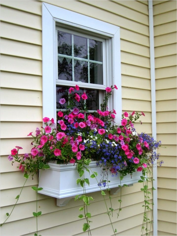 42 Best Flowers for Window Boxes 62 the Best Plants for Wonderful Spring Window Boxes 7
