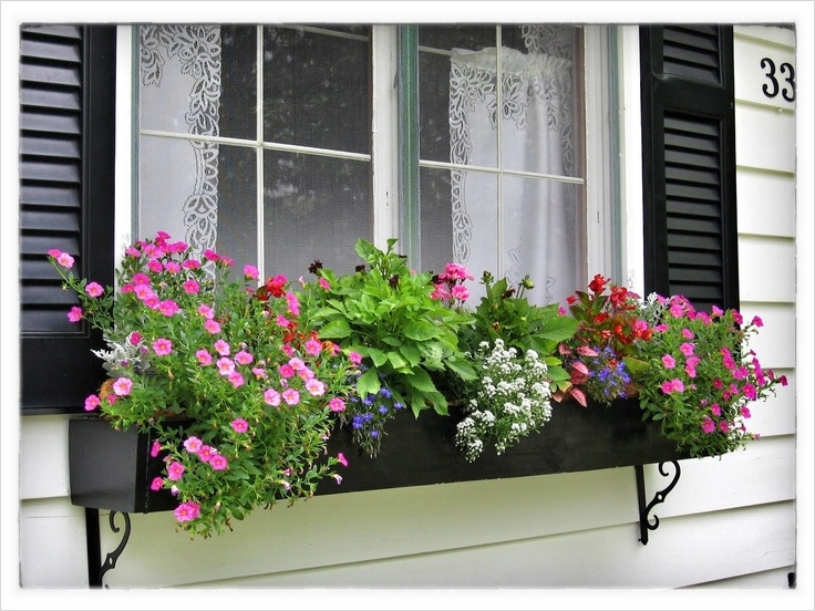 42 Best Flowers for Window Boxes 85 Best Flowers for Window Boxes Gloria Zastko Realtors north Brunswick Nj Central Nj Real Estate 8