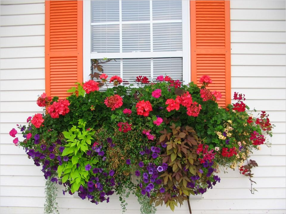42 Best Flowers for Window Boxes 86 How to Plant A Rockin Window Box 2