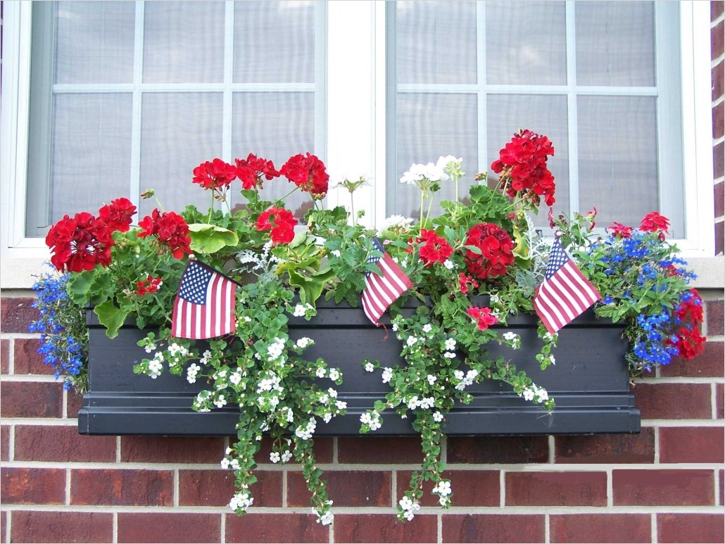 42 Best Flowers for Window Boxes 39 How to Choose the Best Window Boxes for You Windowbox Blog 8